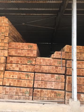 gỗ thông nhập khẩu newsealand