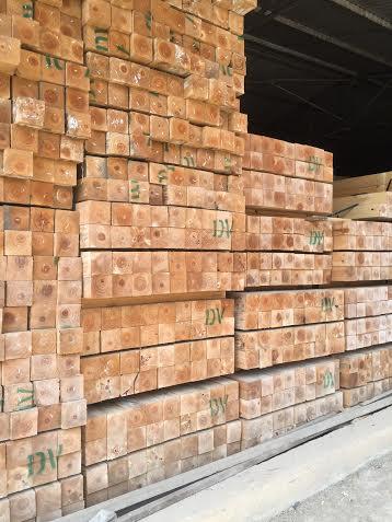 gỗ thông trần nga